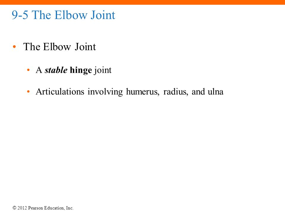 © 2012 Pearson Education, Inc. 9-5 The Elbow Joint The Elbow Joint A stable hinge joint Articulations involving humerus, radius, and ulna
