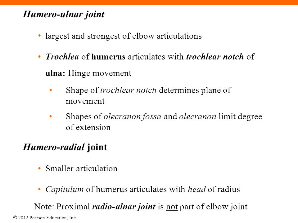 © 2012 Pearson Education, Inc. Humero-ulnar joint largest and strongest of elbow articulations Trochlea of humerus articulates with trochlear notch of