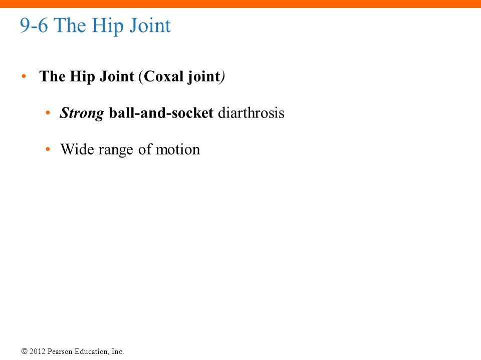 © 2012 Pearson Education, Inc. 9-6 The Hip Joint The Hip Joint (Coxal joint) Strong ball-and-socket diarthrosis Wide range of motion