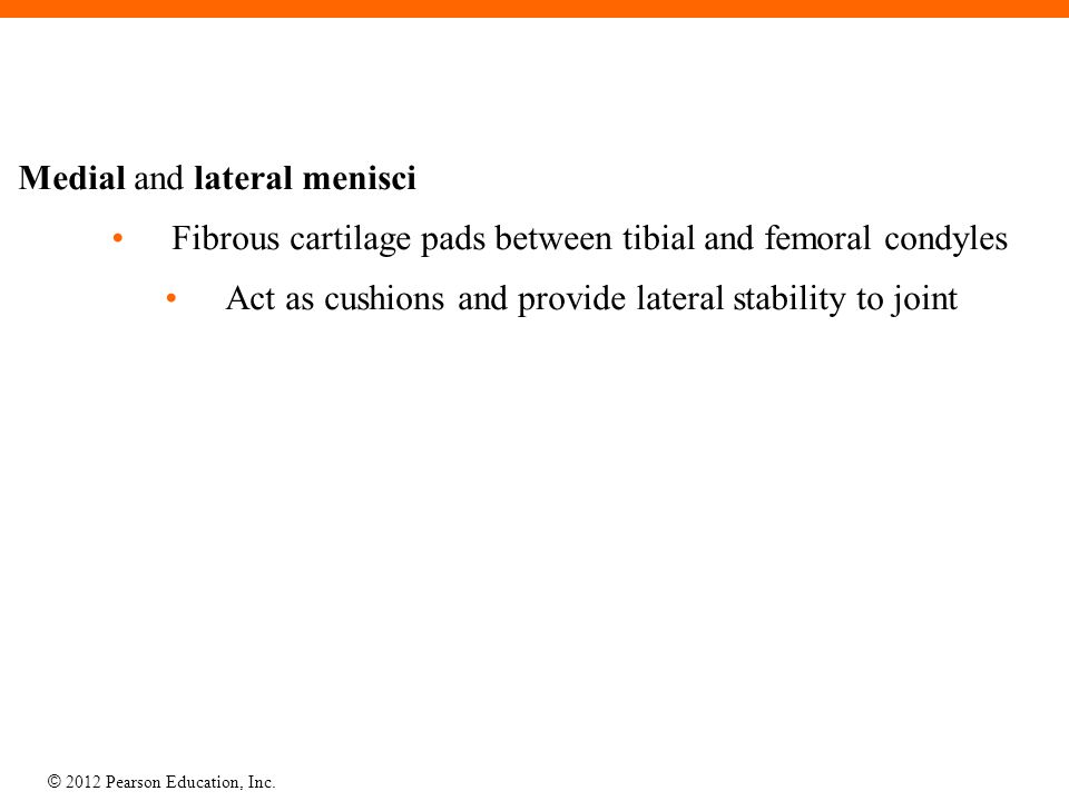 © 2012 Pearson Education, Inc. Medial and lateral menisci Fibrous cartilage pads between tibial and femoral condyles Act as cushions and provide later