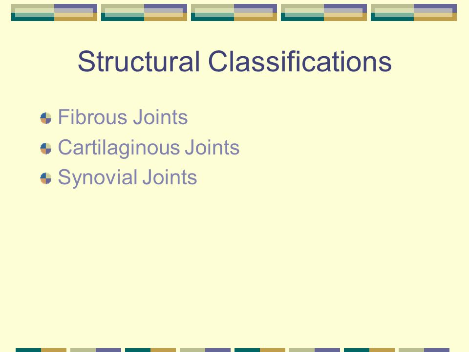 Structural Classifications Fibrous Joints Cartilaginous Joints Synovial Joints