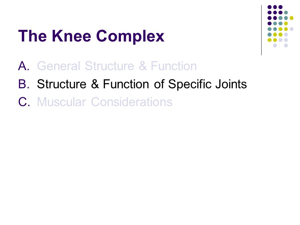 The Knee Complex A.General Structure & Function B.Structure & Function of Specific Joints C.Muscular Considerations