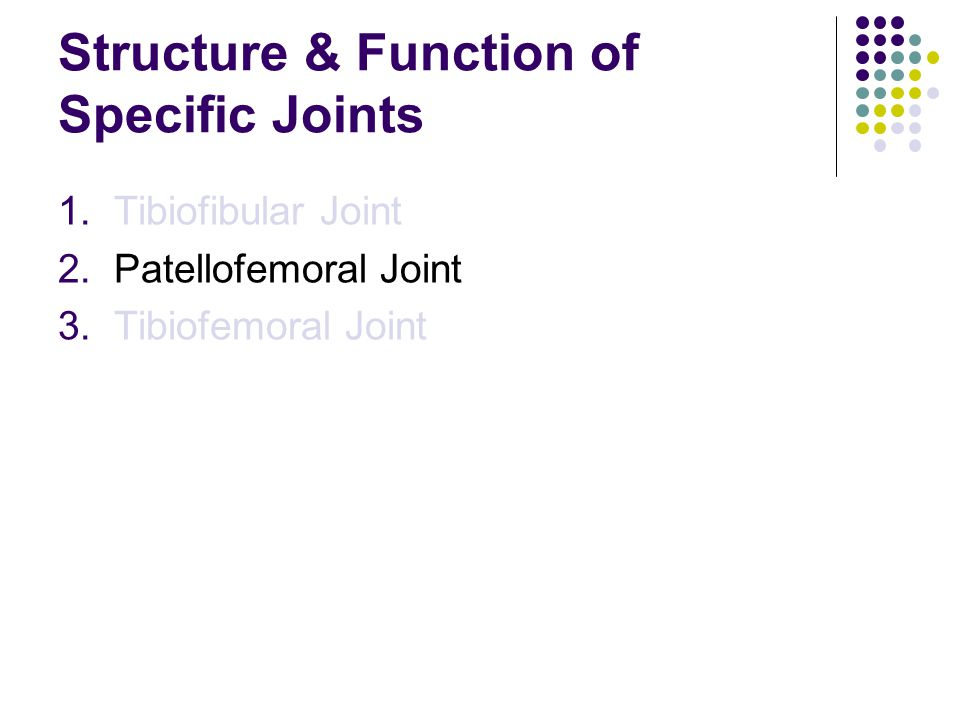 Structure & Function of Specific Joints 1.Tibiofibular Joint 2.Patellofemoral Joint 3.Tibiofemoral Joint