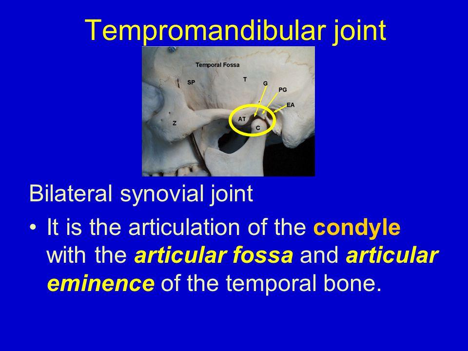 Sensory innervation : branches of the mandibular division of the trigeminal nerve 1-auriculotemporal nerve 2- masseteric nerve.