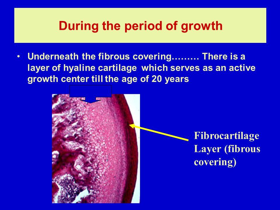 Synovial membrane: 1-cellular intima Fiber free matrix -fibroblast-like cells (type B) -macrophage-like cells (type A) -intermediate cells 2-vascular subintima Loose C.T.