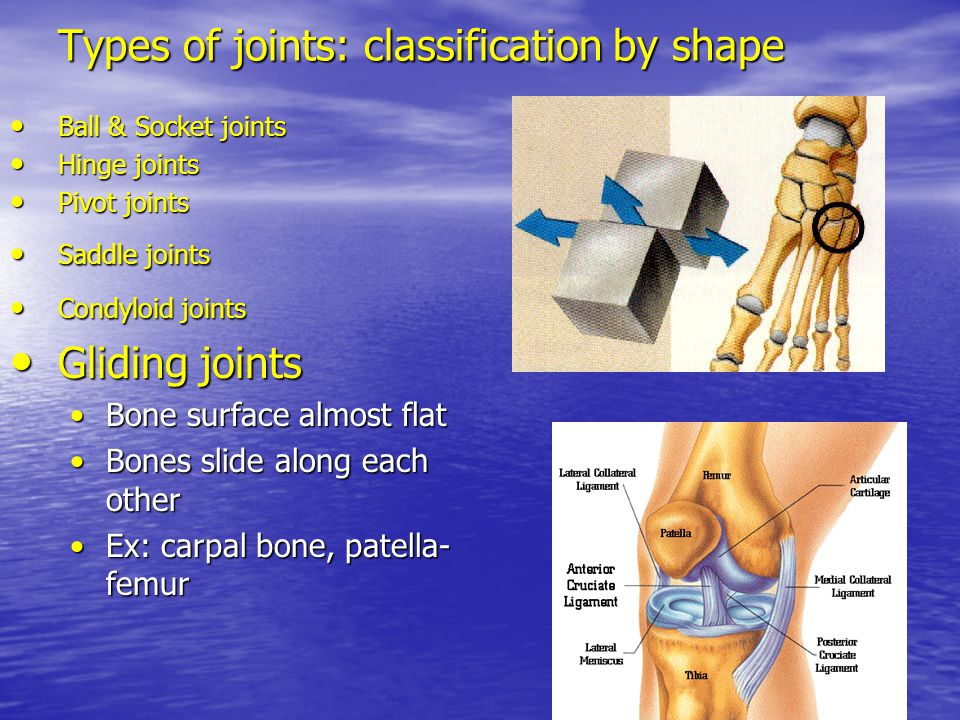 Types of joints: classification by shape Ball & Socket joints Ball & Socket joints Hinge joints Hinge joints Pivot joints Pivot joints Saddle joints S