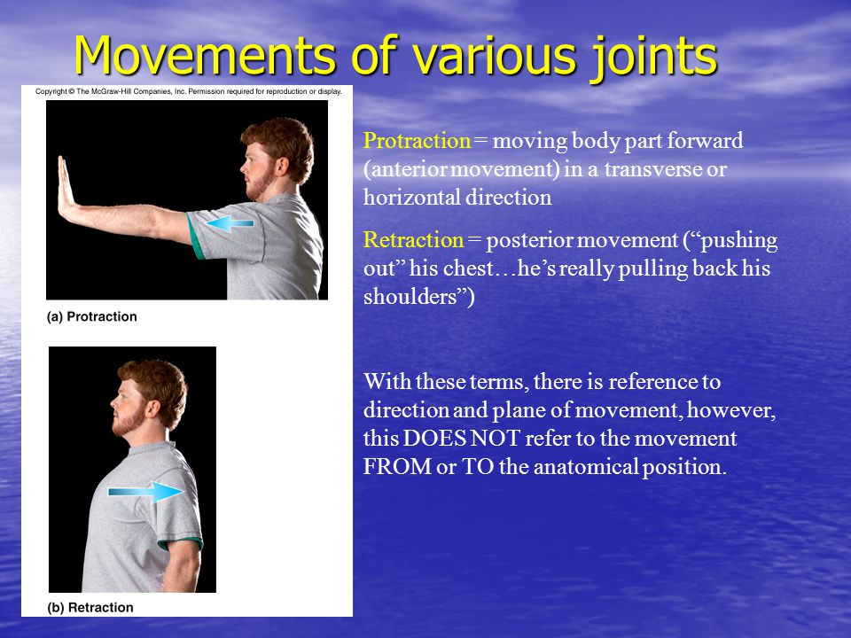 Movements of various joints Protraction = moving body part forward (anterior movement) in a transverse or horizontal direction Retraction = posterior