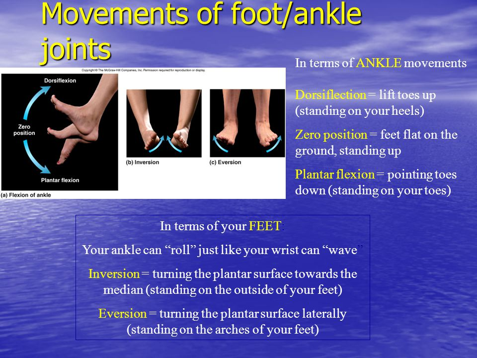 Movements of foot/ankle joints In terms of ANKLE movements Dorsiflection = lift toes up (standing on your heels) Zero position = feet flat on the grou