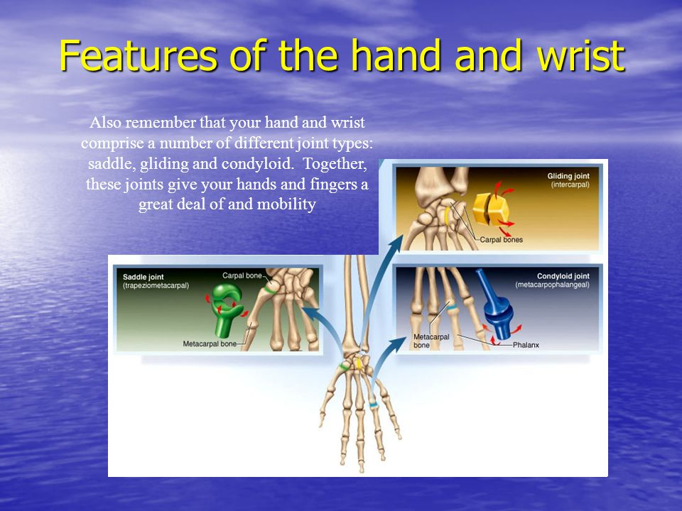 Features of the hand and wrist Also remember that your hand and wrist comprise a number of different joint types: saddle, gliding and condyloid. Toget