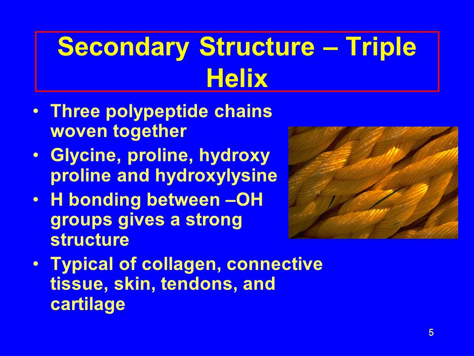 5 Secondary Structure – Triple Helix Three polypeptide chains woven together Glycine, proline, hydroxy proline and hydroxylysine H bonding between –OH groups gives a strong structure Typical of collagen, connective tissue, skin, tendons, and cartilage