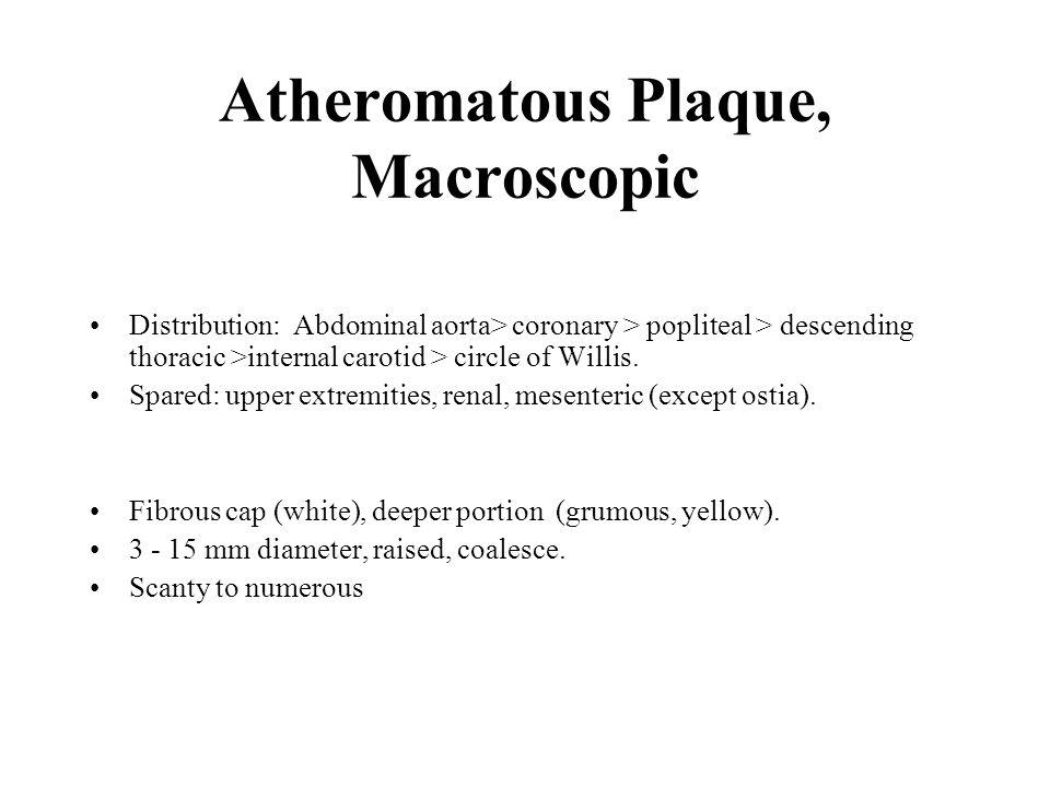 Atheromatous Plaque Histology Fibrous cap: Smooth muscle, WBC, connective tissue, collagen, elastic, proteoglycan.