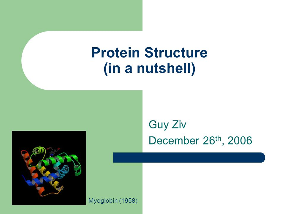 Protein Structure (in a nutshell) Guy Ziv December 26 th, 2006 Myoglobin (1958)