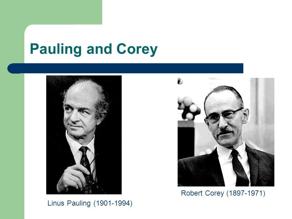 Pauling and Corey Robert Corey (1897-1971) Linus Pauling (1901-1994)