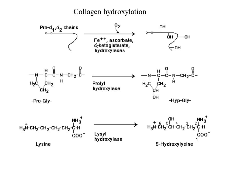 Collagen hydroxylation