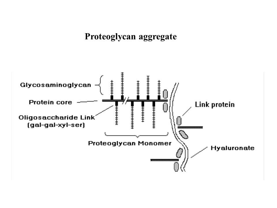 Proteoglycan aggregate
