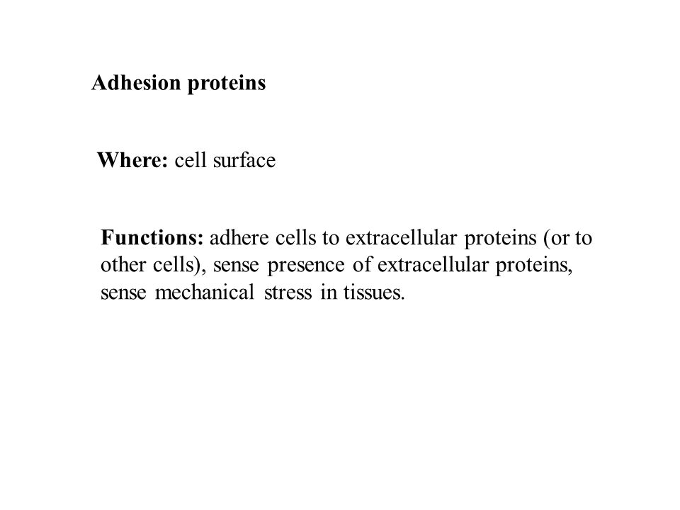 Adhesion proteins Where: cell surface Functions: adhere cells to extracellular proteins (or to other cells), sense presence of extracellular proteins, sense mechanical stress in tissues.