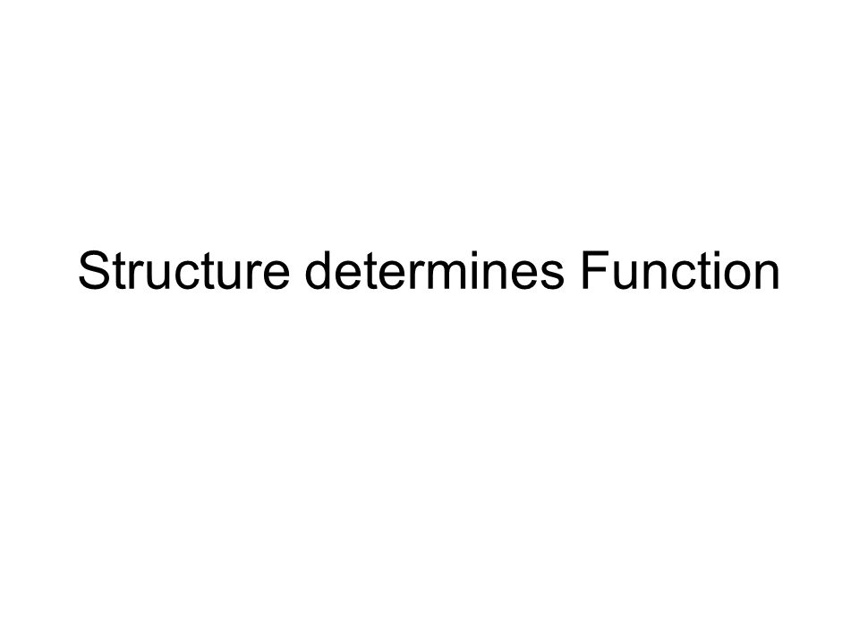 Structure determines Function