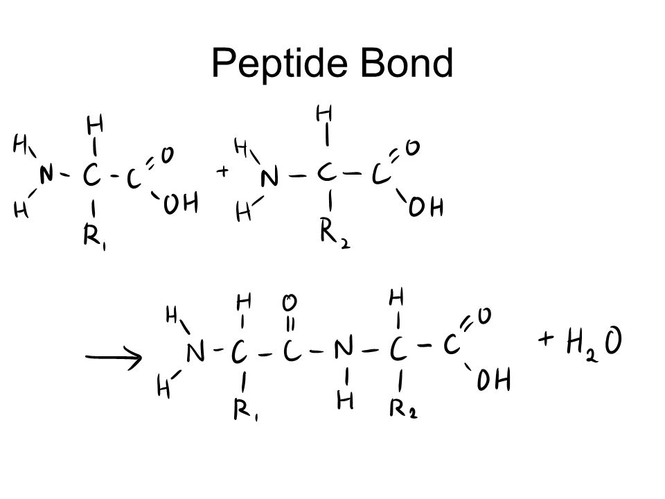 Learning outcomes (e) Describe the structure of an amino acid and the formation and breakage of a peptide bond.