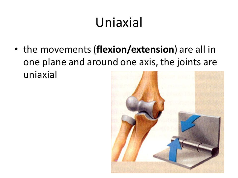 Uniaxial the movements (flexion/extension) are all in one plane and around one axis, the joints are uniaxial