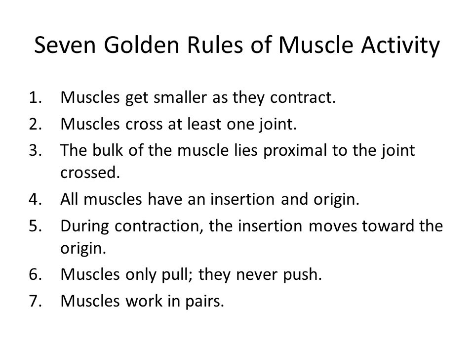 Seven Golden Rules of Muscle Activity 1.Muscles get smaller as they contract. 2.Muscles cross at least one joint. 3.The bulk of the muscle lies proxim