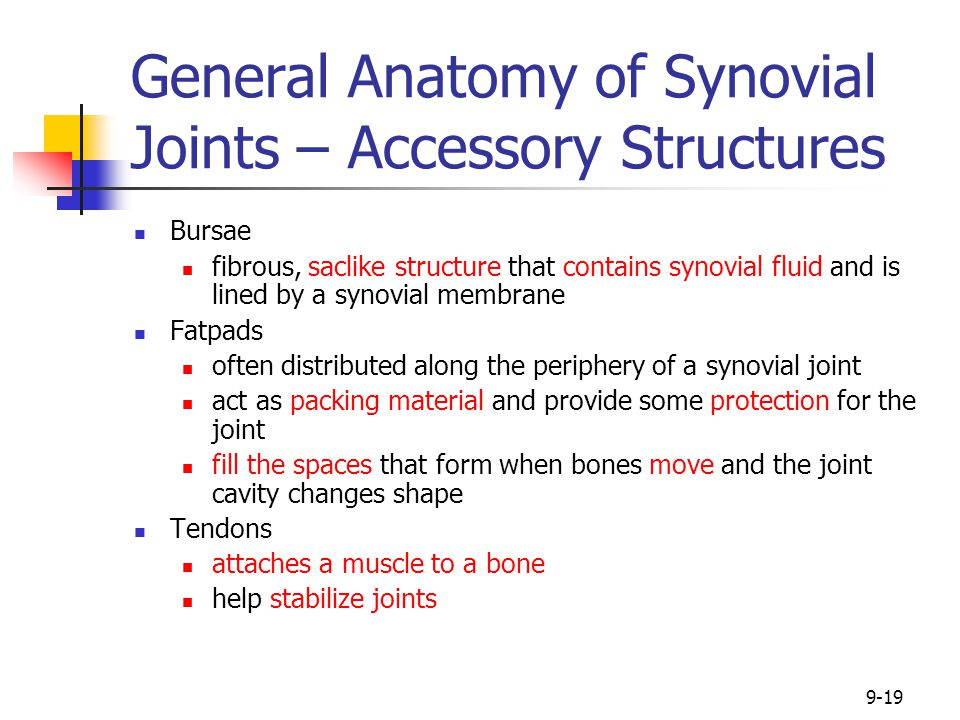 9-19 General Anatomy of Synovial Joints – Accessory Structures Bursae fibrous, saclike structure that contains synovial fluid and is lined by a synovi