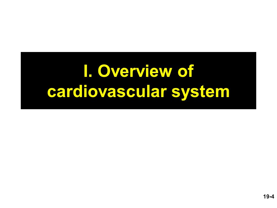 I. Overview of cardiovascular system 19-4
