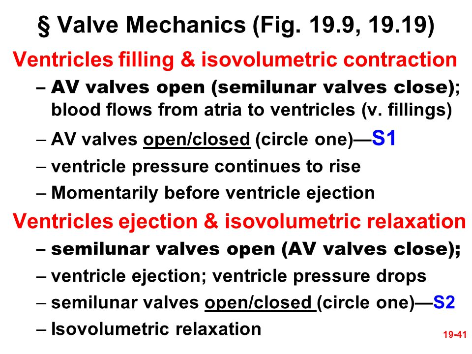 19-41 § Valve Mechanics (Fig. 19.9, 19.19) Ventricles filling & isovolumetric contraction –AV valves open (semilunar valves close) ; blood flows from
