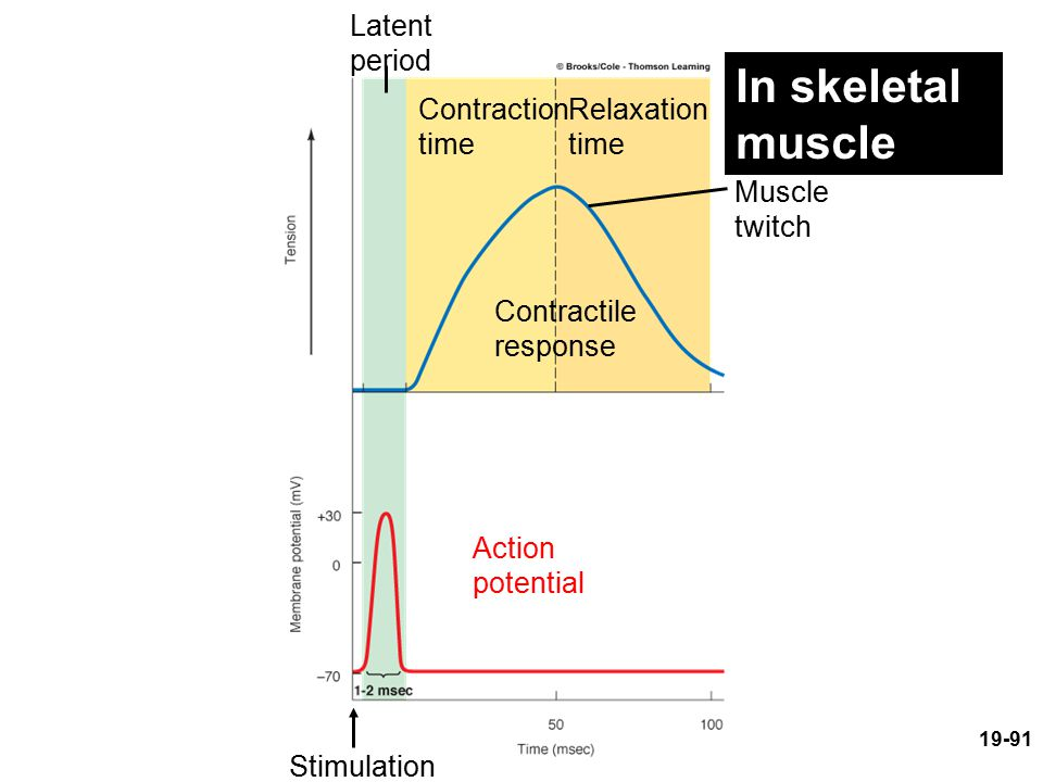 Latent period Contraction time Relaxation time Muscle twitch Contractile response Action potential Stimulation In skeletal muscle 19-91