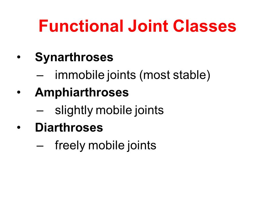 Functional Joint Classes Synarthroses –immobile joints (most stable) Amphiarthroses –slightly mobile joints Diarthroses –freely mobile joints