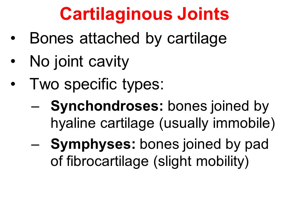 Cartilaginous Joints Bones attached by cartilage No joint cavity Two specific types: –Synchondroses: bones joined by hyaline cartilage (usually immobi