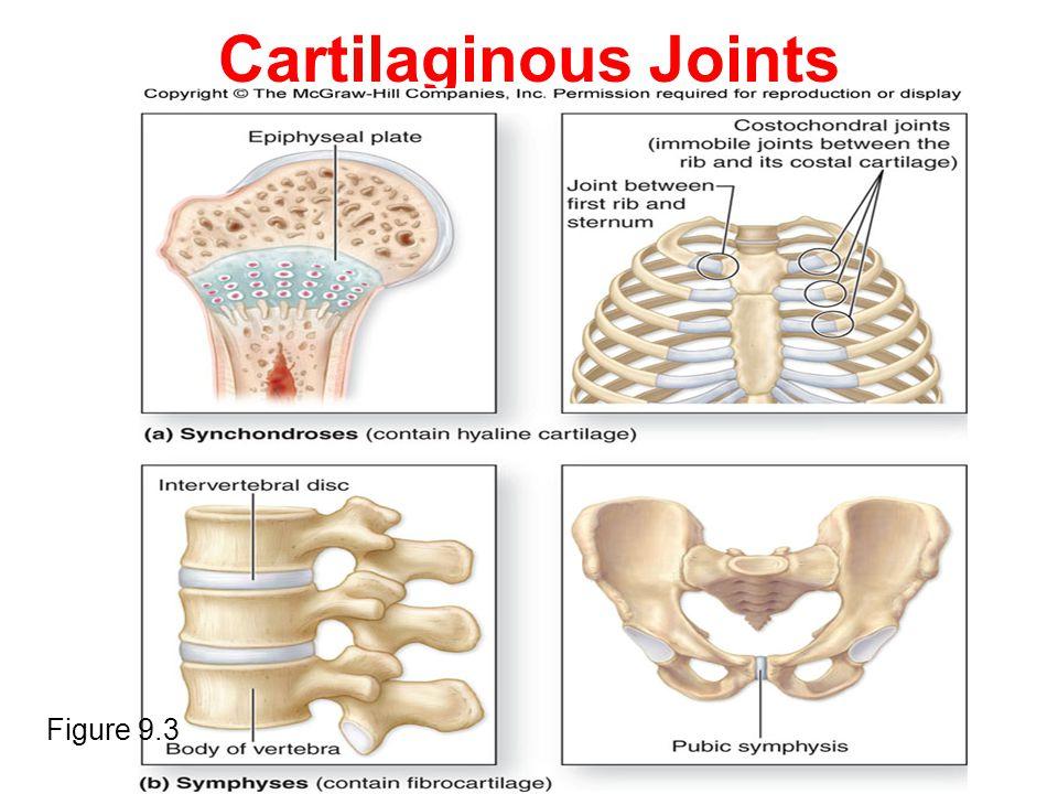 Cartilaginous Joints Figure 9.3