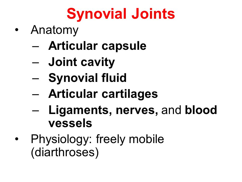Synovial Joints Anatomy –Articular capsule –Joint cavity –Synovial fluid –Articular cartilages –Ligaments, nerves, and blood vessels Physiology: freel