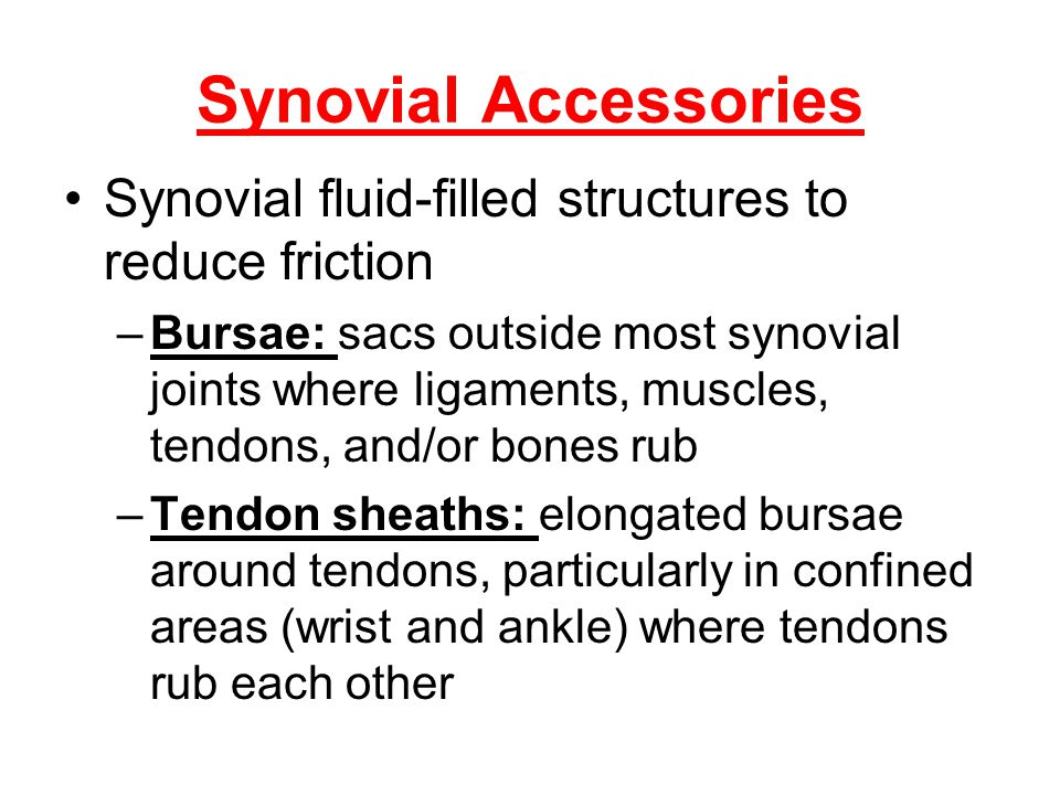 Synovial Accessories Synovial fluid-filled structures to reduce friction –Bursae: sacs outside most synovial joints where ligaments, muscles, tendons,