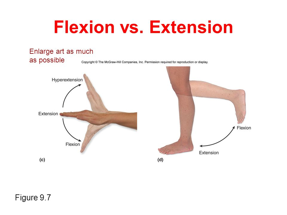 Flexion vs. Extension Figure 9.7 Enlarge art as much as possible
