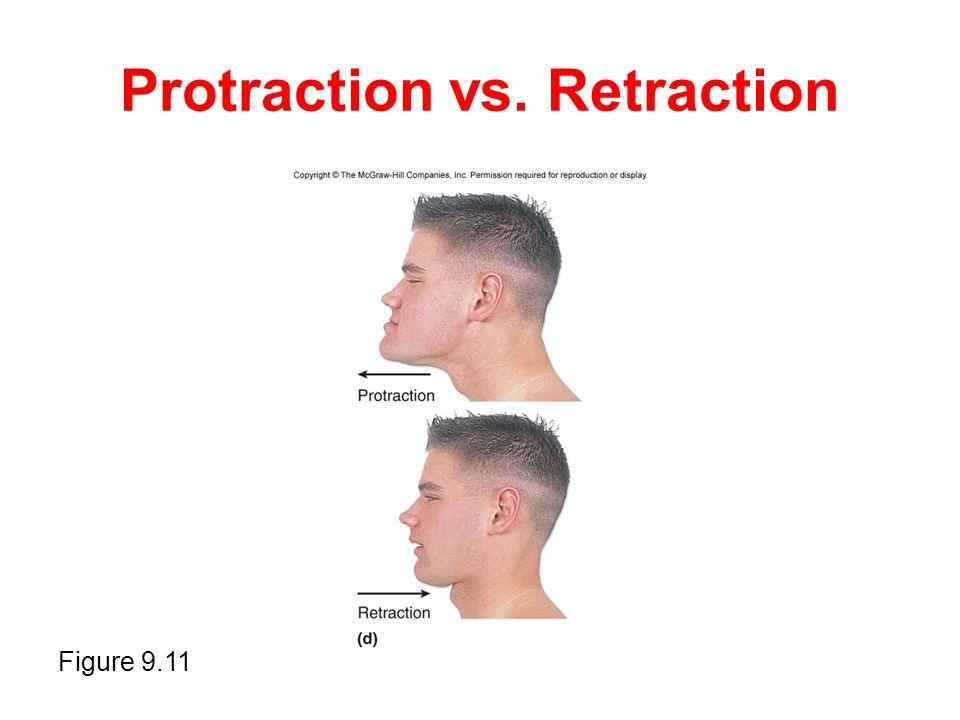 Protraction vs. Retraction Figure 9.11