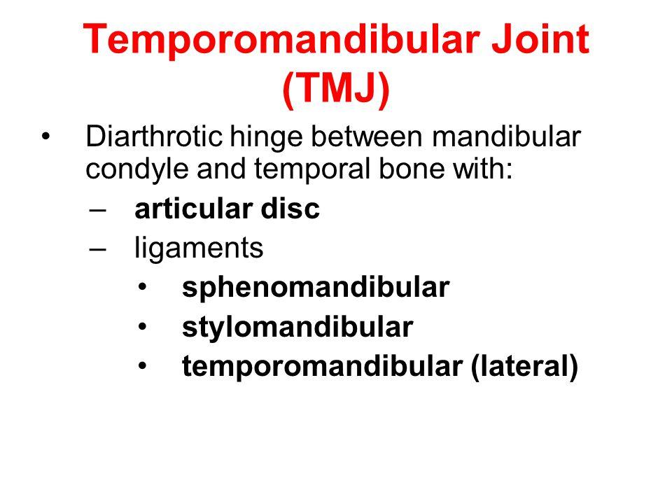 Temporomandibular Joint (TMJ) Diarthrotic hinge between mandibular condyle and temporal bone with: –articular disc –ligaments sphenomandibular styloma