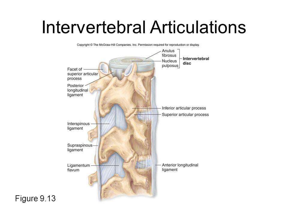 Intervertebral Articulations Figure 9.13