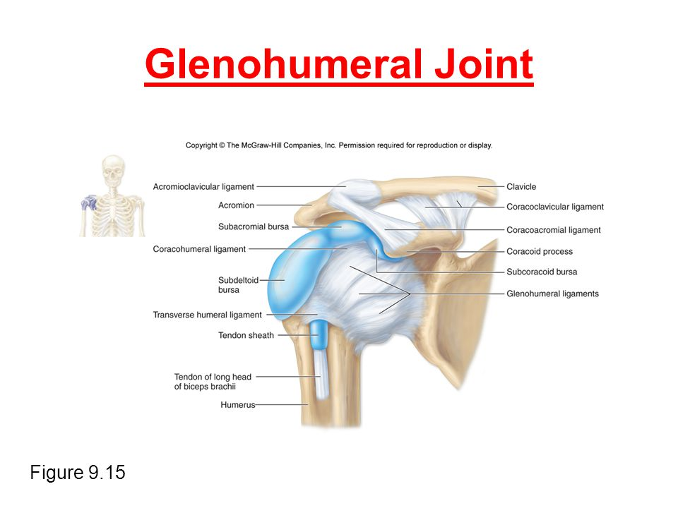 Glenohumeral Joint Figure 9.15