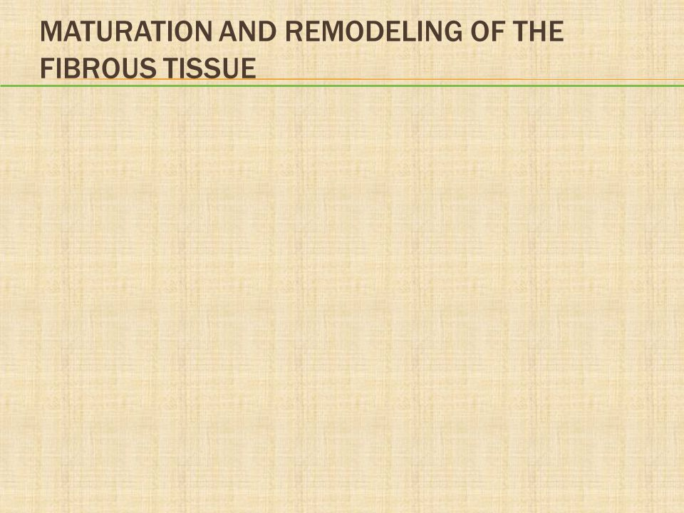 MATURATION AND REMODELING OF THE FIBROUS TISSUE