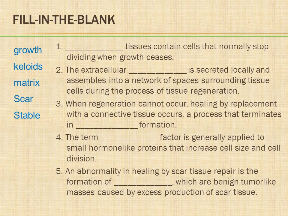CELL PROLIFERATION AND TISSUE REGENERATION  Parenchymal tissue  Stromal tissue -The working part - The binding part