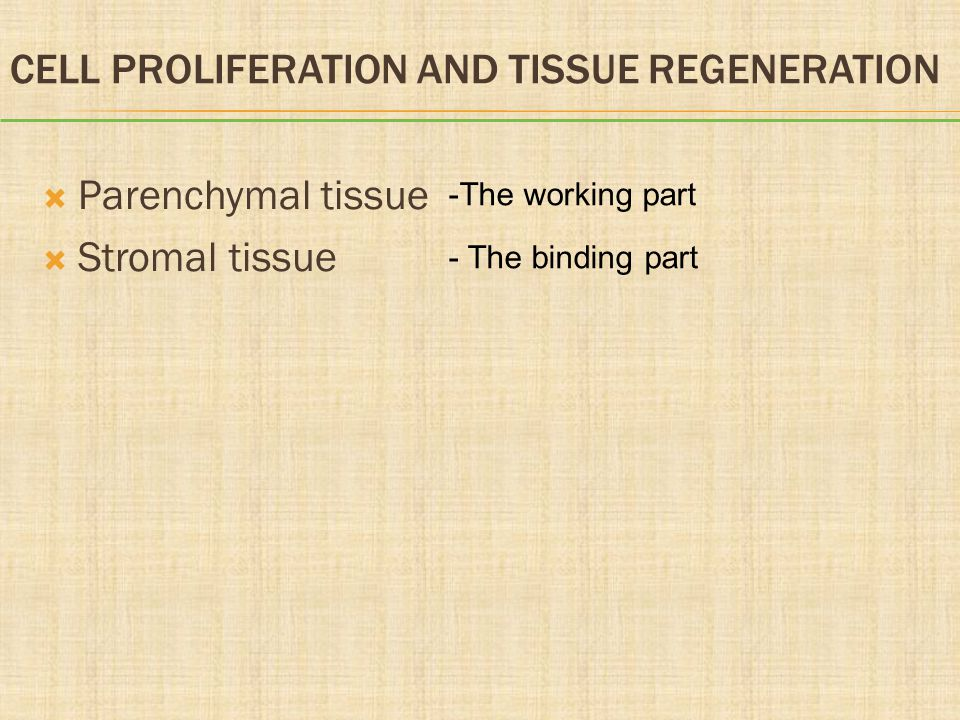 CELL PROLIFERATION AND TISSUE REGENERATION  Parenchymal tissue  Stromal tissue -The working part - The binding part