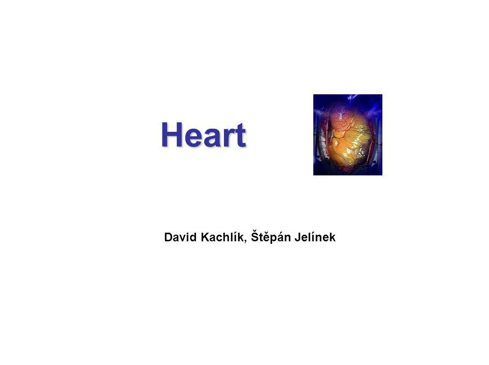 Heart David Kachlík, Štěpán Jelínek
