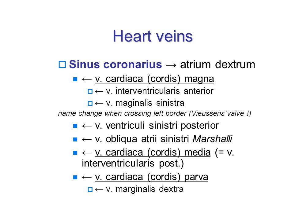Heart veins  Sinus coronarius → atrium dextrum ← v.