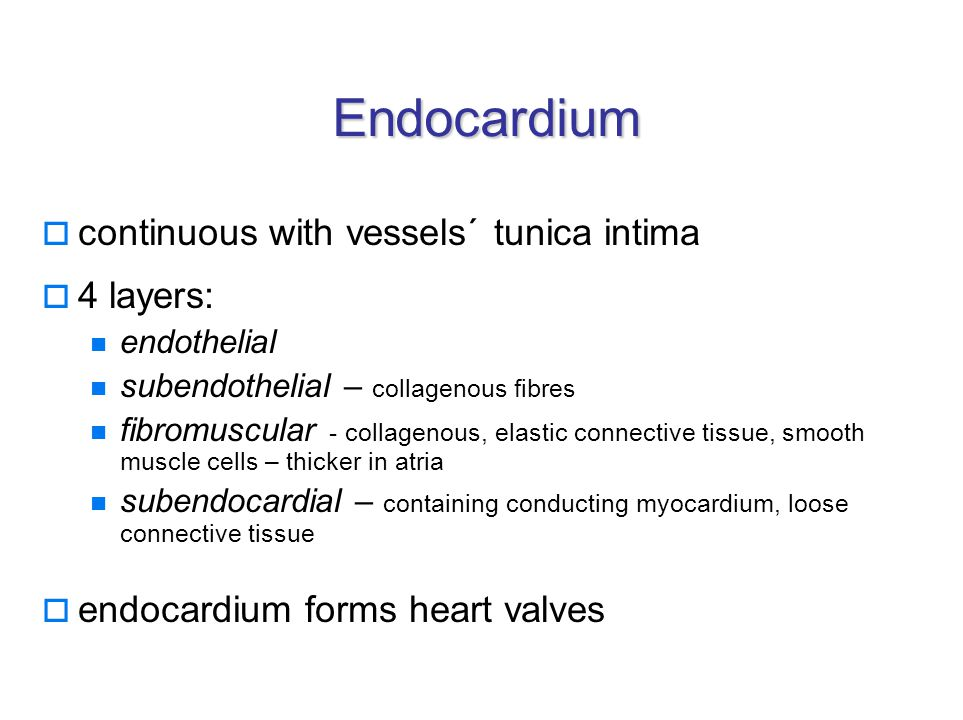 Endocardium  continuous with vessels´ tunica intima  4 layers: endothelial subendothelial – collagenous fibres fibromuscular - collagenous, elastic