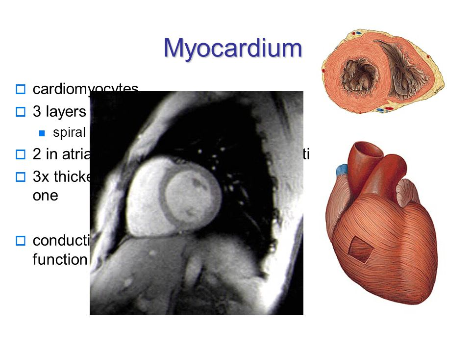 Basic clinical units  Endocardium: endocarditis, valvular defects (inborn, acquired)  Myocardium: ischmeic heart disease (AP, IM), myocarditis, cardiomyopathy  Pericardium: pericarditis, tamponade  Conducting system: arrythmia  Developing defects: septal defects, transposition of large vessels, Fallot´s tri-, tetra-, pentalogy, opened Botallo´s duct, aorta coarctation