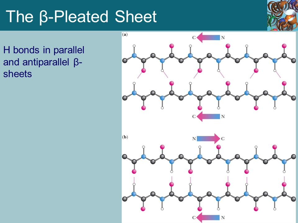 The β-Pleated Sheet H bonds in parallel and antiparallel β- sheets