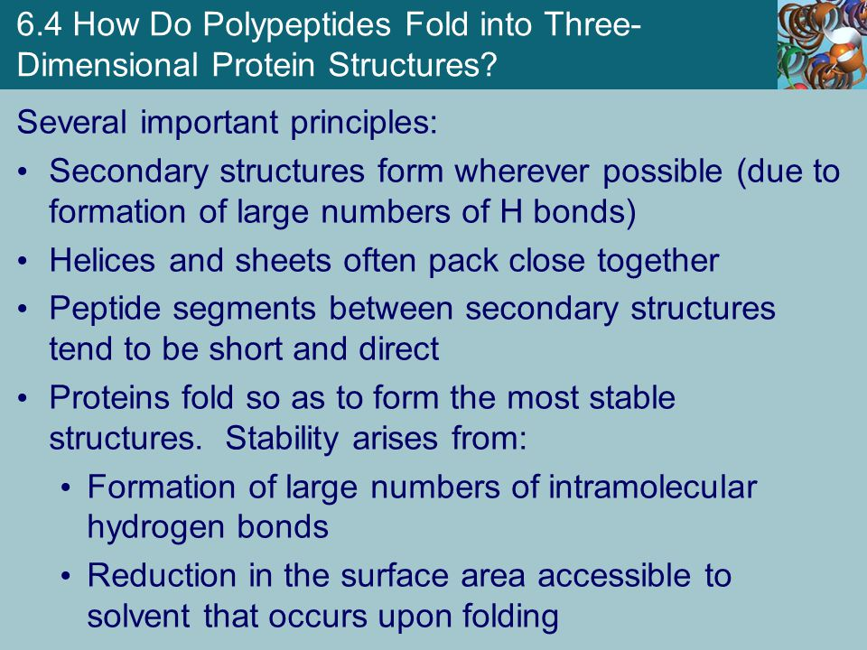 6.4 How Do Polypeptides Fold into Three- Dimensional Protein Structures? Several important principles: Secondary structures form wherever possible (du