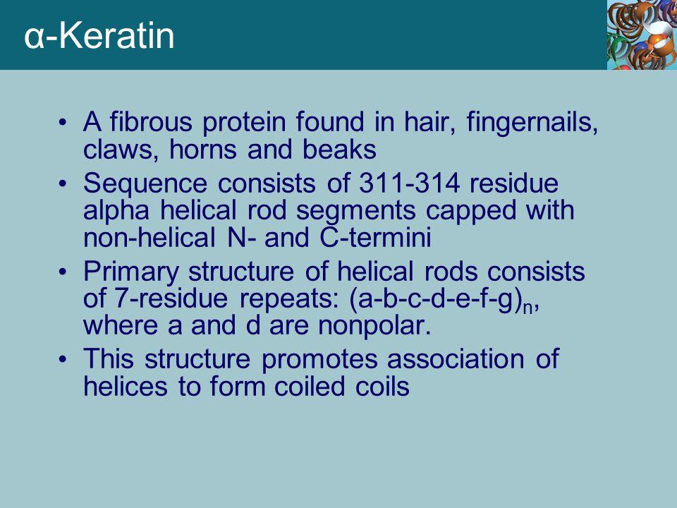α-Keratin A fibrous protein found in hair, fingernails, claws, horns and beaks Sequence consists of 311-314 residue alpha helical rod segments capped