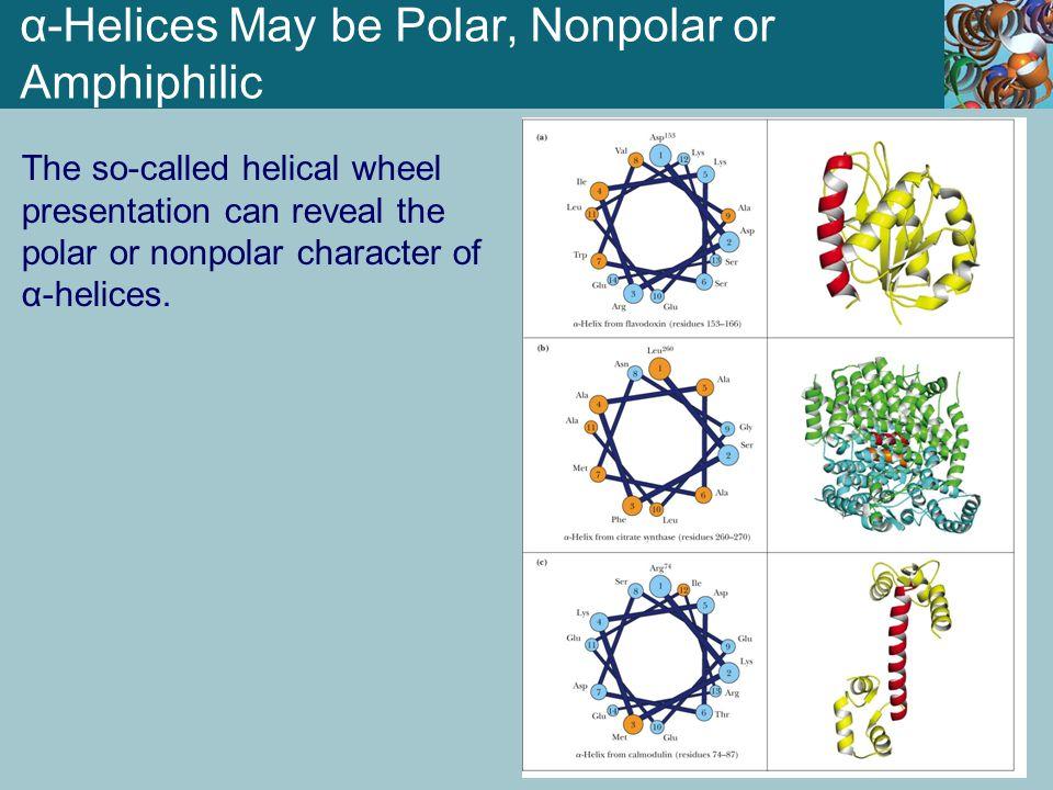 α-Helices May be Polar, Nonpolar or Amphiphilic The so-called helical wheel presentation can reveal the polar or nonpolar character of α-helices.