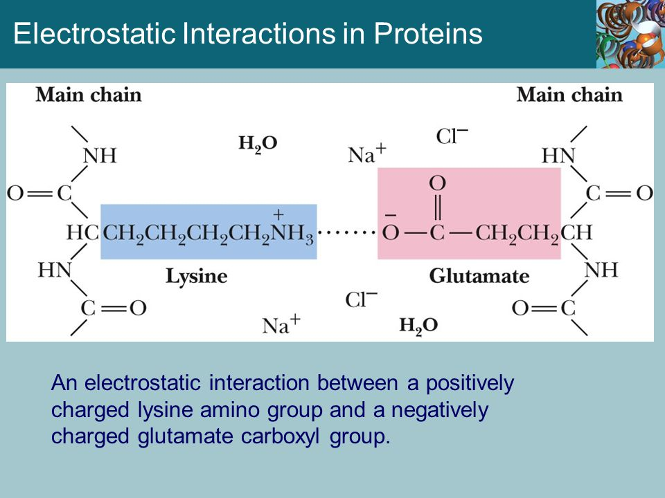 Amino acids can be classified as helix- formers or helix breakers